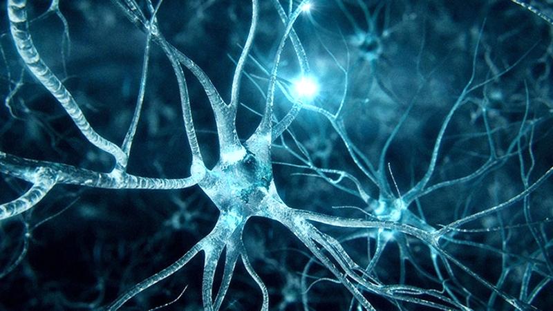 Inside the Brain – EEG vs. fMRI